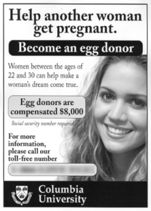 egg donor2