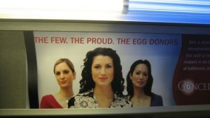 egg donor3